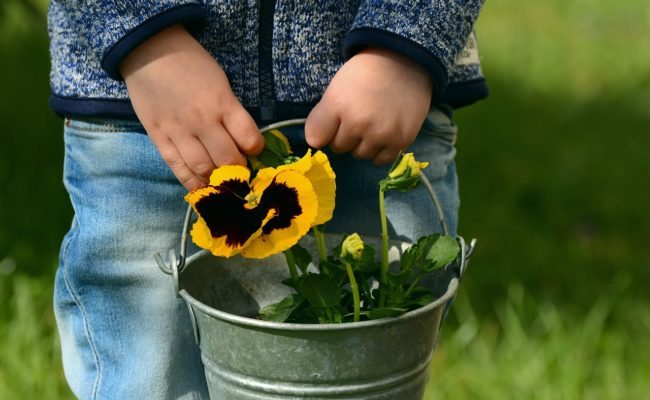 plant activities for toddlers