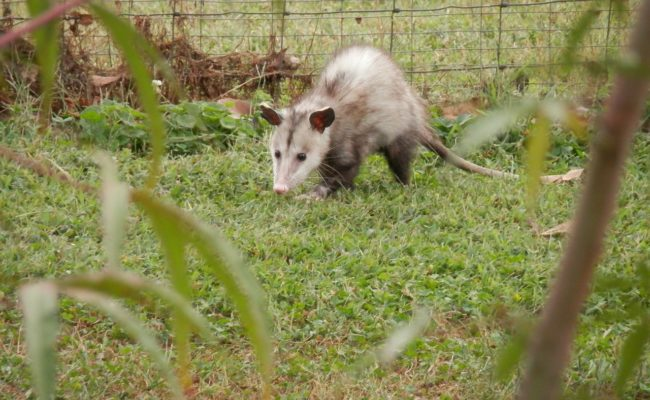 Keep Possums Away