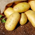 potato companion plants
